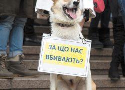 Москва подхватила идею киевлян о создании «зоополиции»