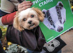 Контроль животных: методы гуманные